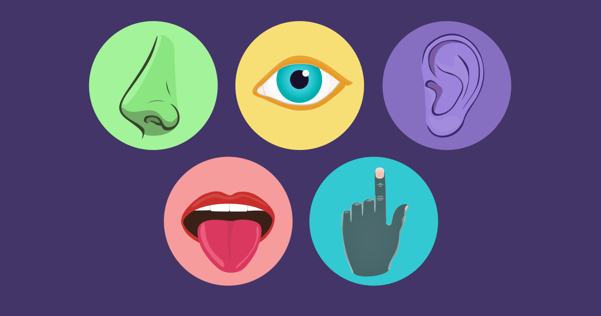 How the 5 Senses Impact How We Learn